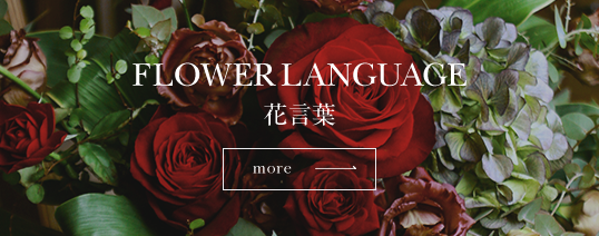 FLOWER LANGUAGE 花言葉