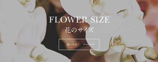 花のサイズ
