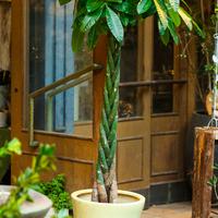 観葉植物のサムネイル