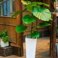 Plantのサムネイル