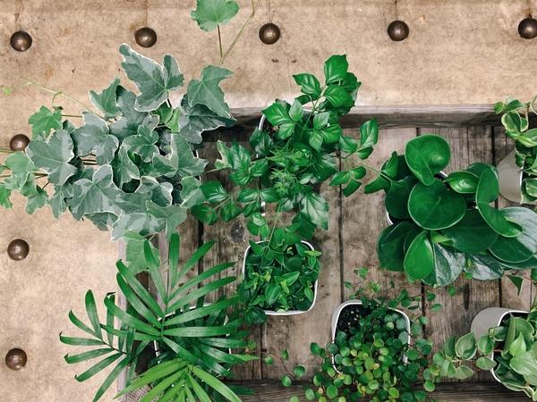 ミニ観葉植物⁂