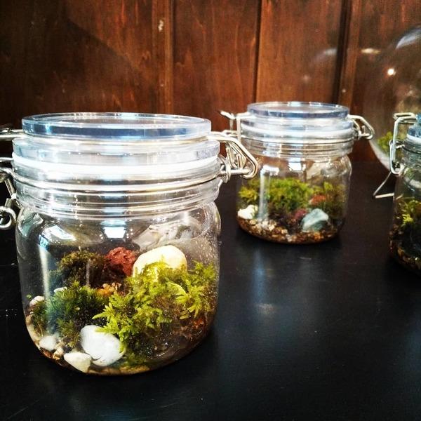 自宅で育てる小さな森…